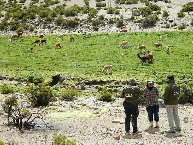 Photo of CARABINEROS LOCALIZA A HOMBRES EXTRAVIADOS EN SALAR DE COPOSA